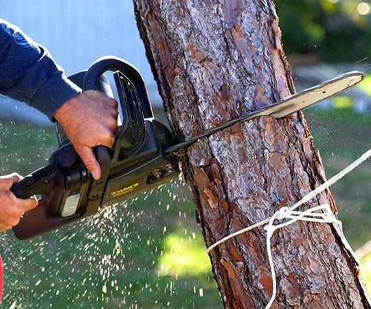 Спил деревьев в Самаре и Самарской области