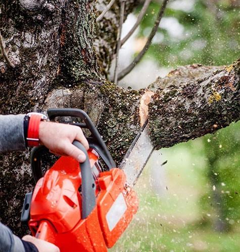 Услуга по спиливанию деревьев в Самаре